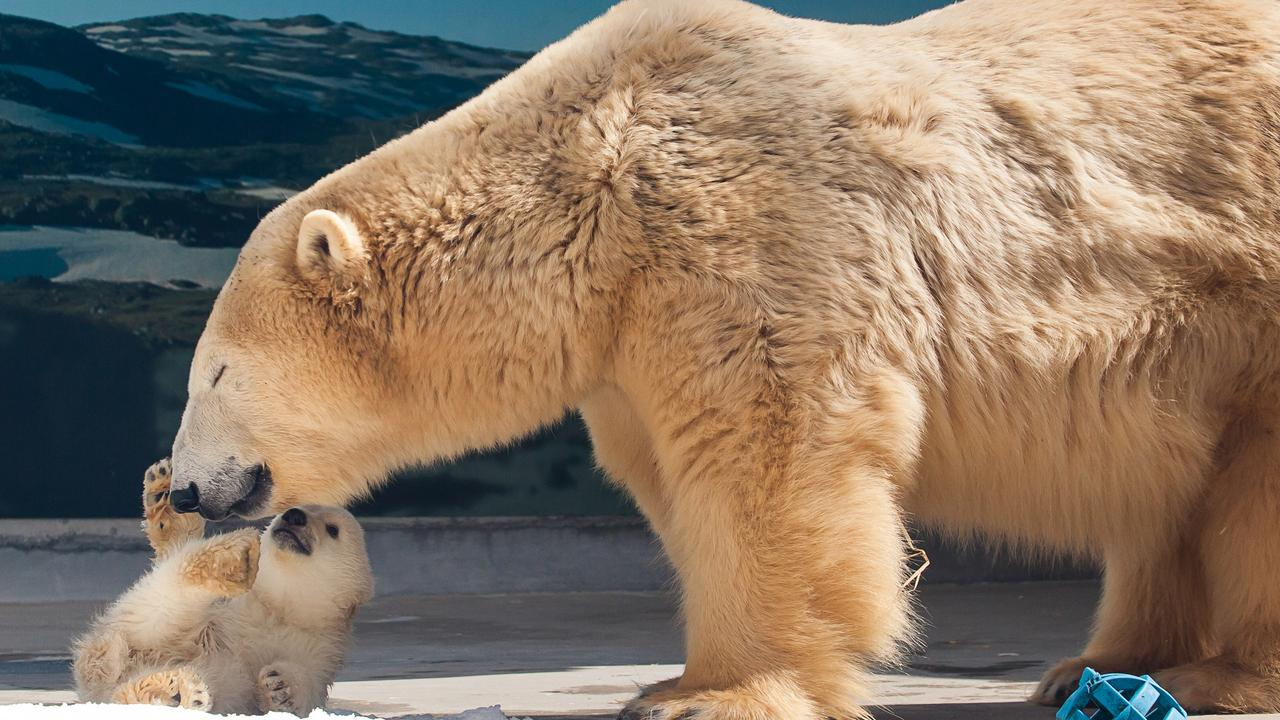 Sea World polar bear Liya tragically passed away over the weekend, devastating animal lovers the world over and staff at Sea World theme park.