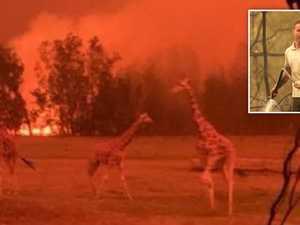 Mogo Zoo animals return to their enclosures