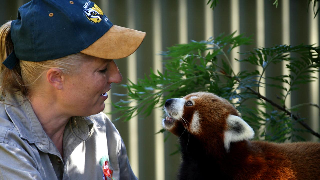 Keeper Cindy McGillivray with red panda Frodo in 2009. The red pandas and other small animals took shelter in the zoo keeper's during the worst of the fires.