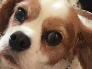 HIS FAMILY NEEDS HIM: Urgent plea for sick pup