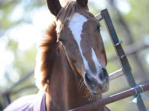 Boy in serious condition after being run over by a horse