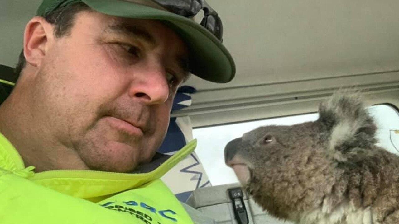 Damian Campbell-Davys helped a tiny koala near Nerriga in NSW. Source: Facebook.