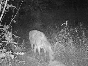 Bizarre deer sighting at popular Rockhampton gardens