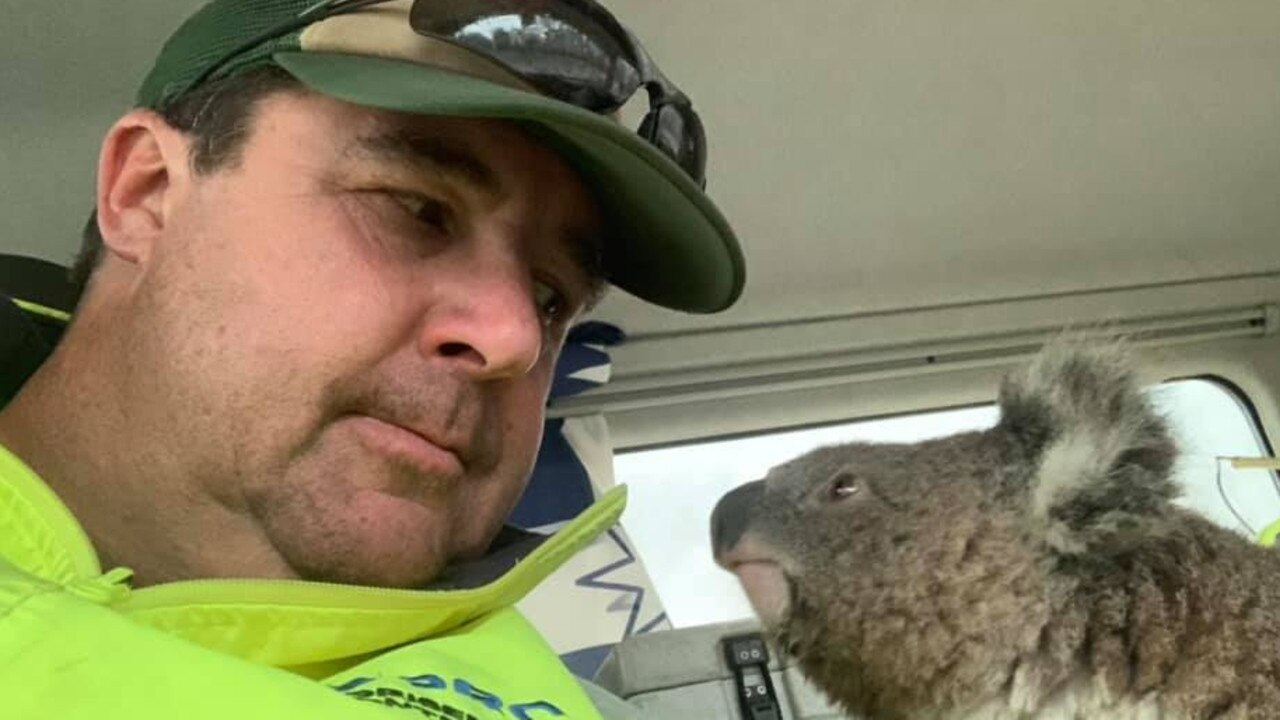 Damian Campbell-Davys helped a tiny koala near Nerriga in NSW. Source: Facebook.