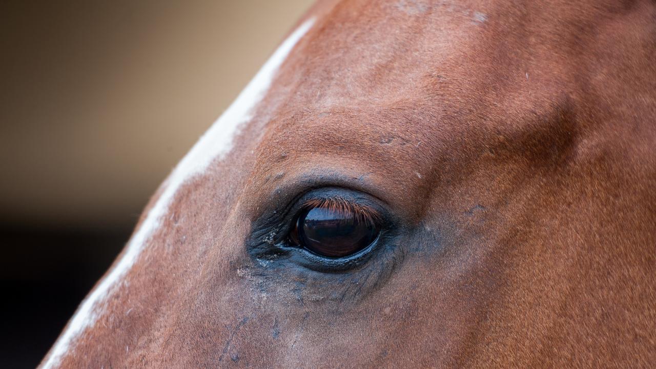 horse on the catwalkhorse. racehorse generic eye
