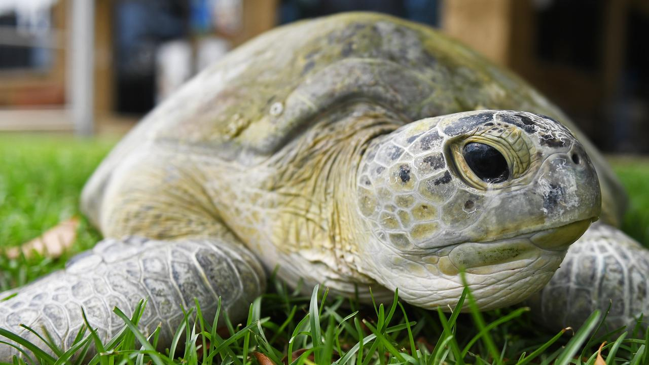 Sea turtle rescued - the Ark animal hospital