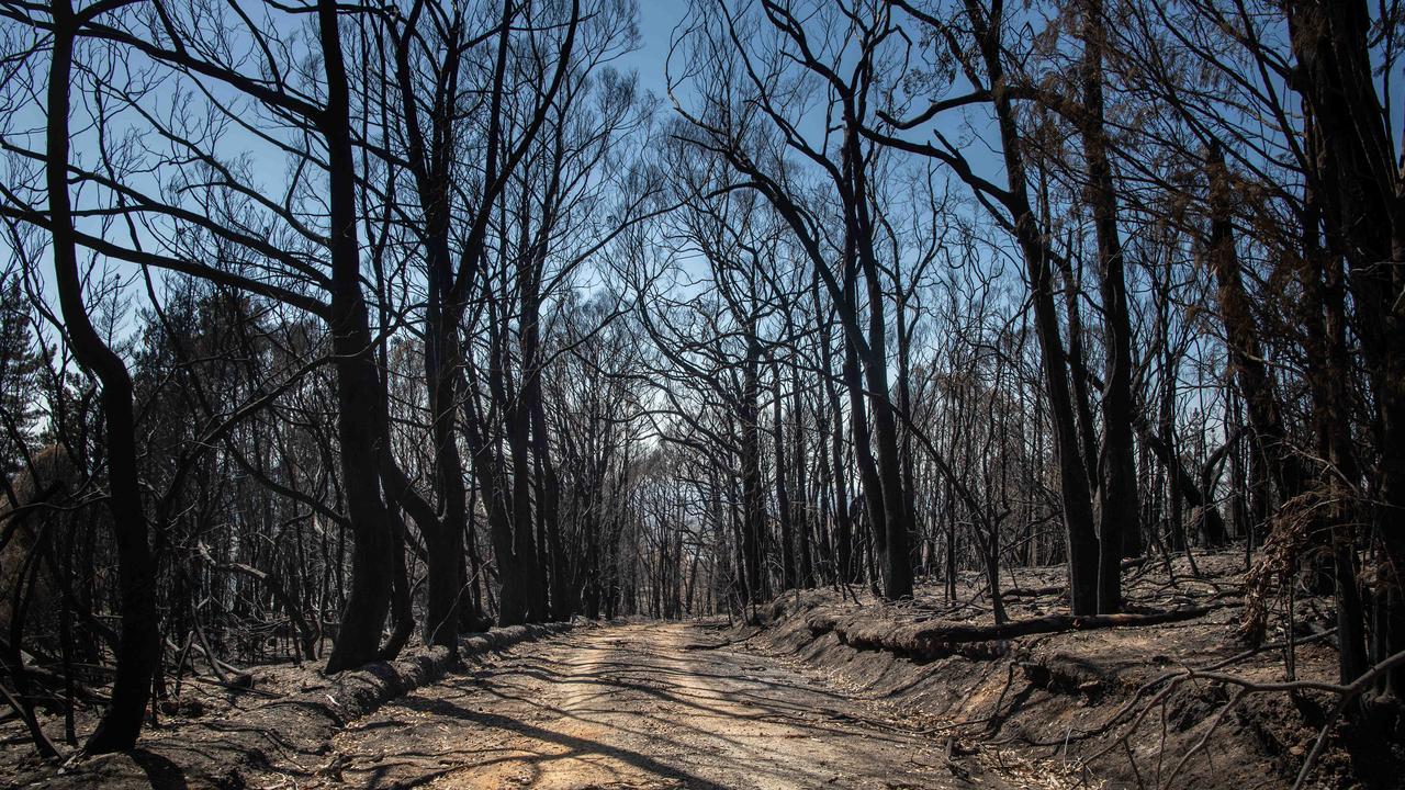 Another of Brad Fleet's striking photos taken inside the Cudlee Creek fireground, at Lenswood. Picture: Brad Fleet