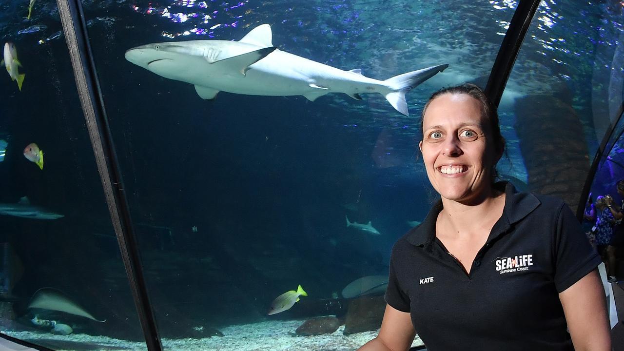 Kate Willson says it's time to remove the stigma around sharks. Photo Patrick Woods.