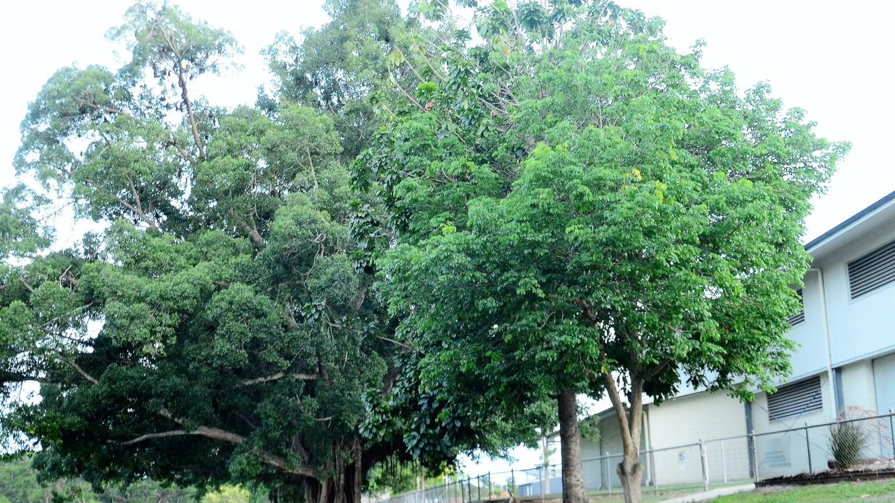 Parents are considering boycotting a primary school after roosts of flying foxes moved in over the school holidays, prompting fears for children's safety.