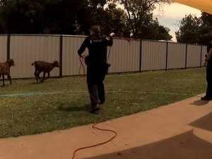 WATCH THE VIDEO: Cop shows off impressive roping skills