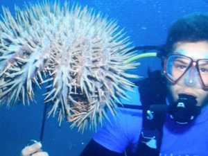 Dive instructor sues for $1.6m over starfish injury