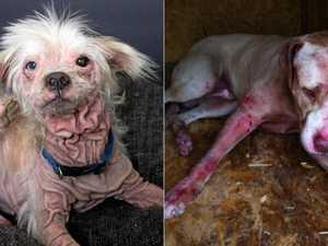 REVEALED: 15 worst Coast suburbs for animal cruelty