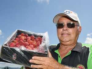 Sarina farmer's seedless lychees an Aussie first