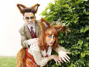 Mr Fox's fantastic return to Brisbane