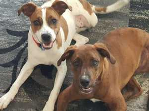 REVEALED: Gympie's animal neglect, cruelty hot spots