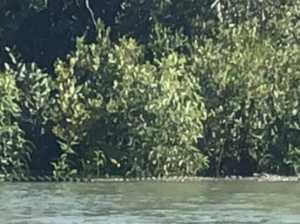 Fish offal is bringing the crocs closer