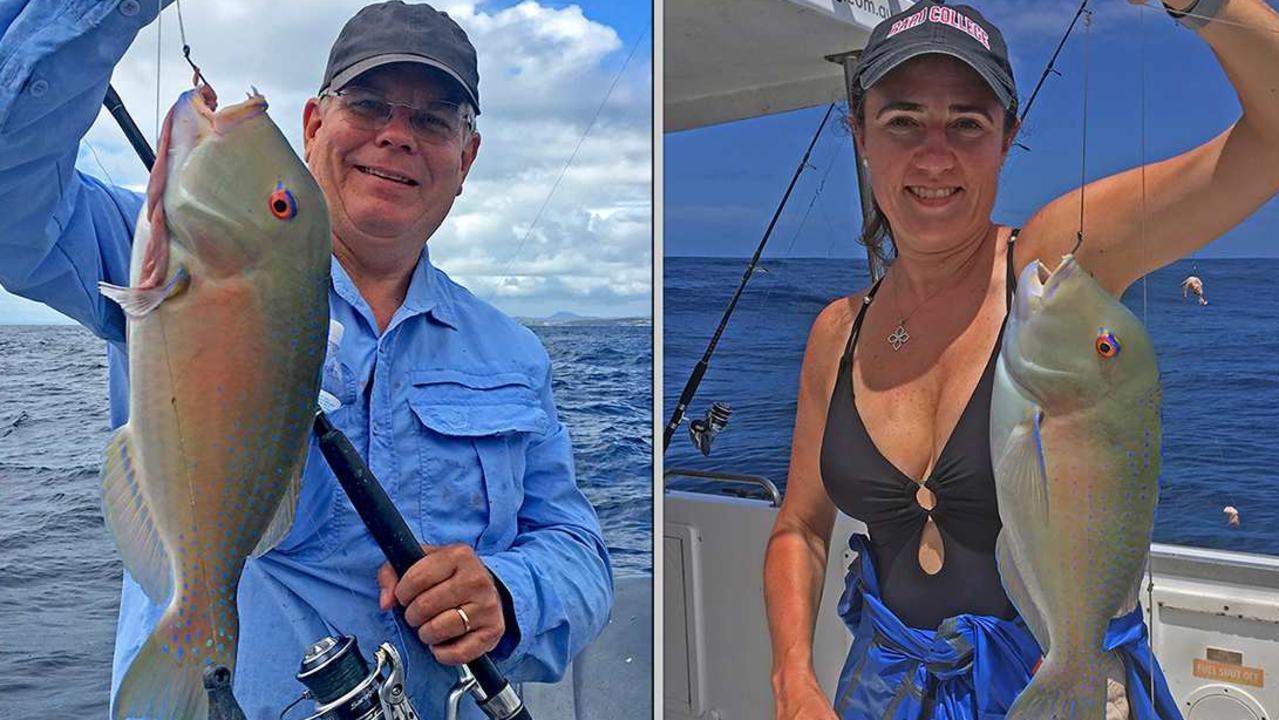 Quality venus tusk fish. Boated on a Cougar One charter to Sunshine Reef. Photo: www.fishingnoosa.com.au