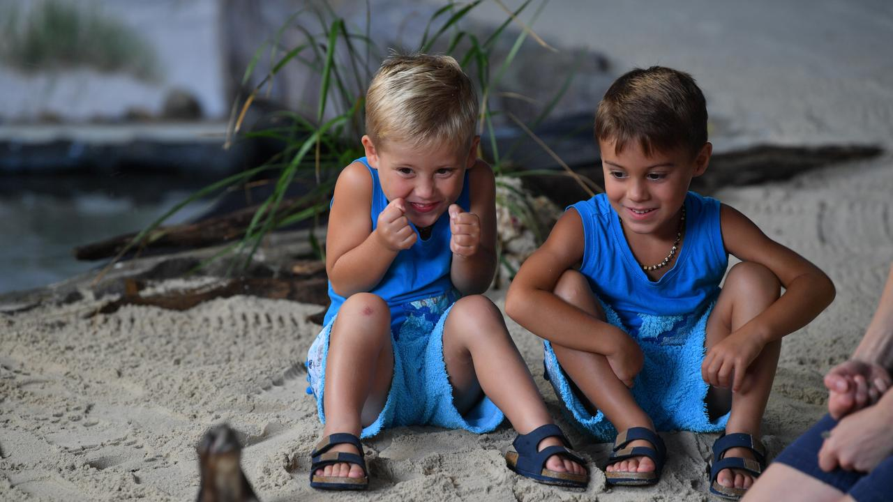 On their third visit to Sea Life in less than a month, Connor and Colby Hill, 4, got up close and personal with the new penguins after the twin brothers won a competition to name one of the penguins. Photo: John McCutcheon