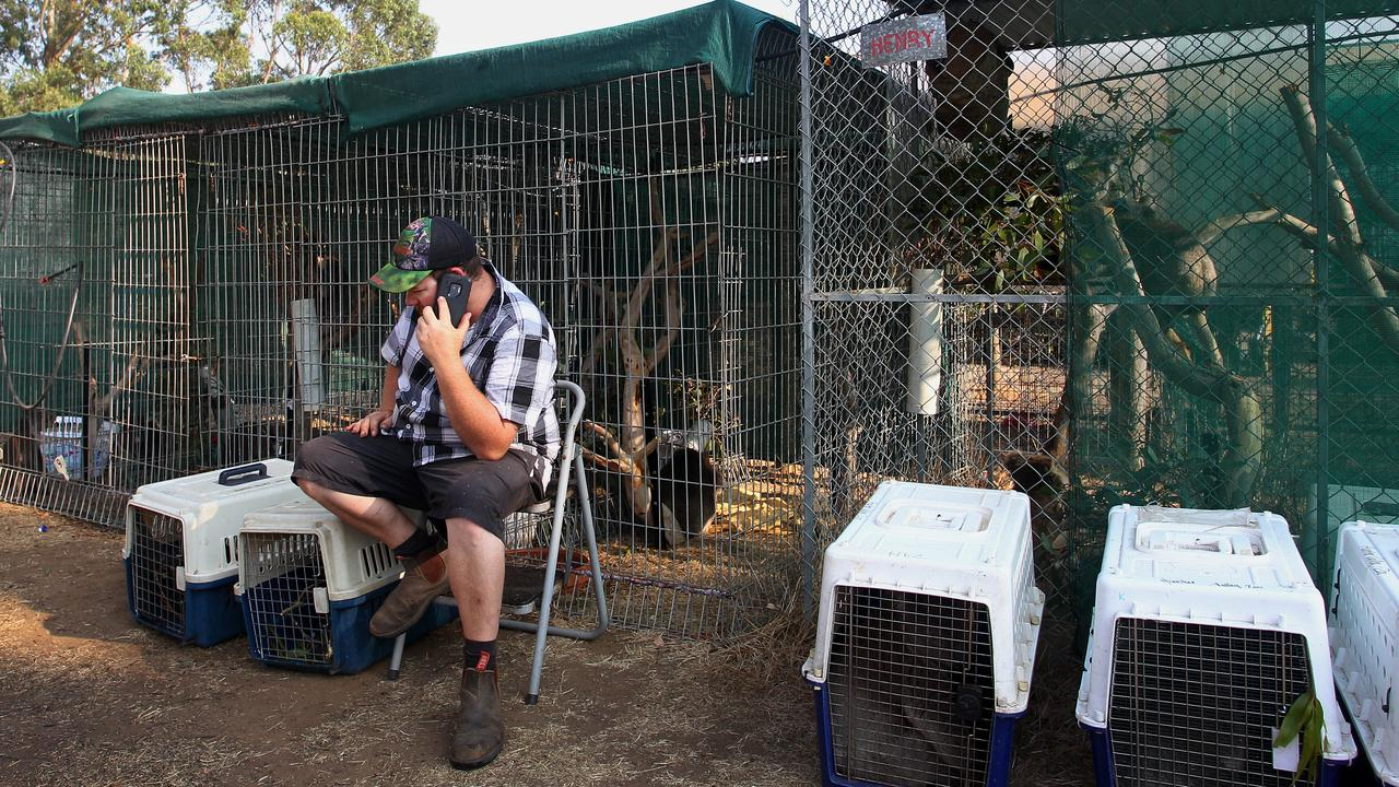 Sam Mitchell on the phone on Thursday, as he prepares to defend the wildlife park. Picture: Lisa Maree Williams/Getty