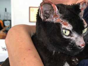Lovable cat's face burnt but feline survives firestorm