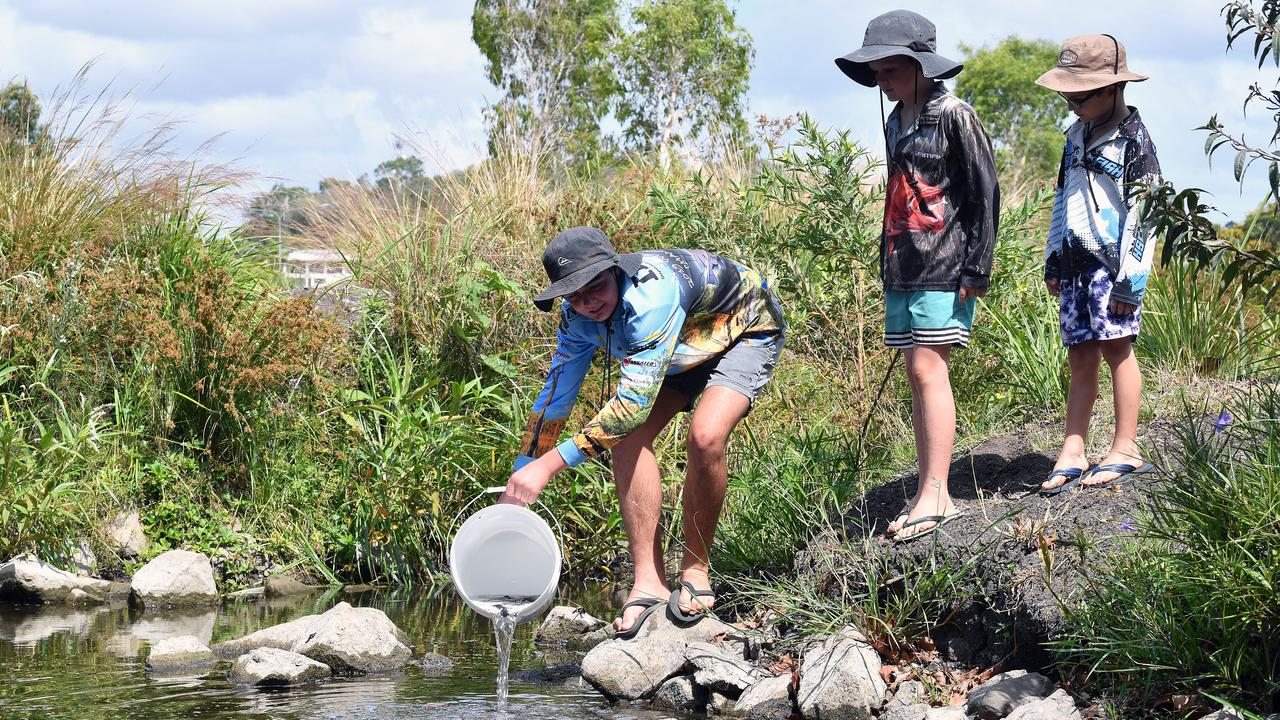 Oscar Tweedle, Flynn Pertsch and Toby Pertsch release Barramundi fingerlings into the Mackay Gooseponds. Picture: Tony Martin