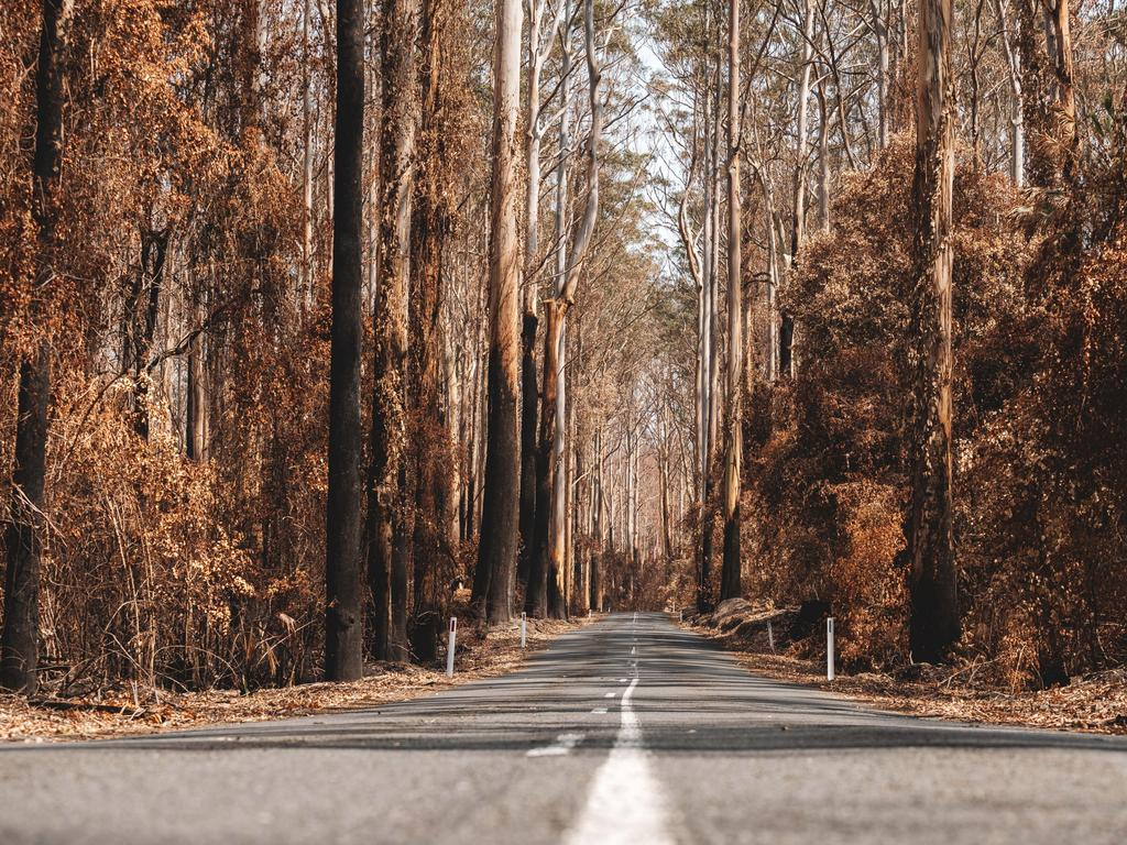 Mount Agony Rd after the bushfires. Picture: Josh Burkinshaw