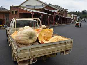 Kyogle giant pumpkin competition