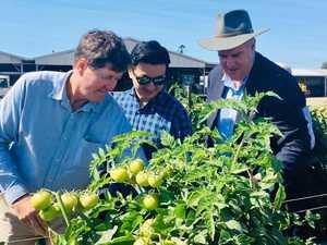 Drones, insect sensors: Bowen's farming future