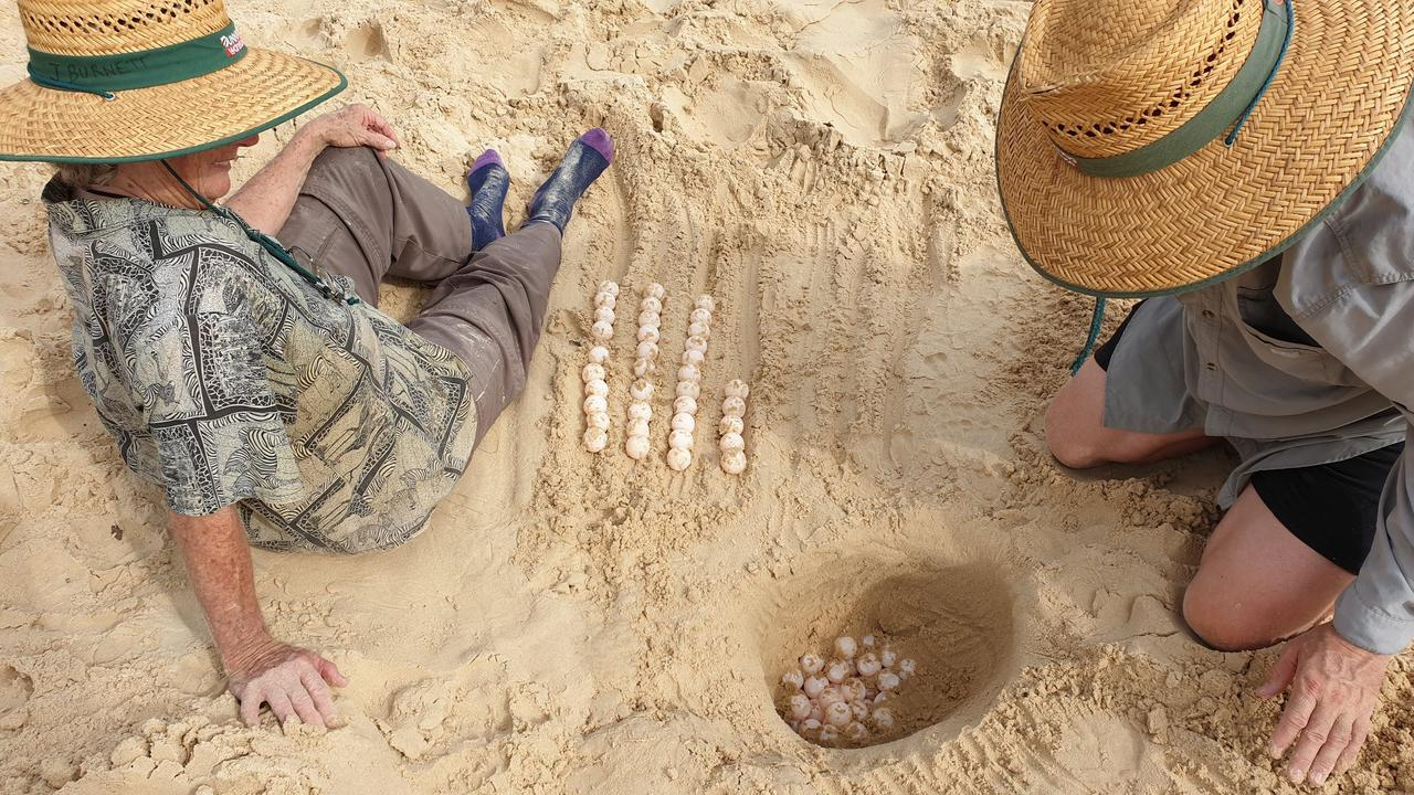 Turtle care leader Joan Burnett sitting next to the eggs lined up in rows of 10 as they are removed from the nest.