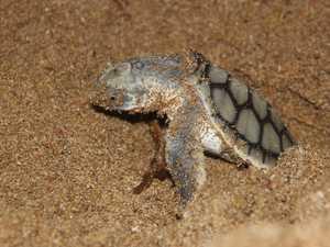 Turtle awareness this nesting season