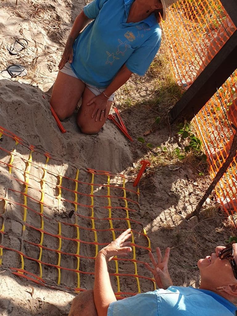 Turtle egg rescue: Coolum and North Shore Coast Care volunteers teach Cooloola Coast Turtle Care volunteers how to protect turtle eggs.