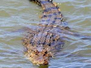 Crocodile sighting at Fraser Island campsite