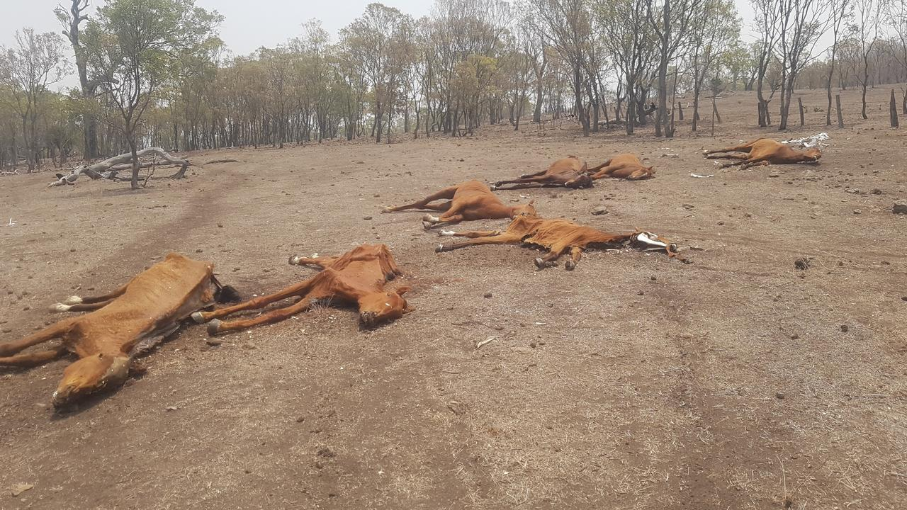 Twenty-two horses were found dead on a property in the Toowoomba region.