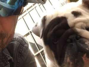 Passenger's heartbreak after dog dies mid-flight