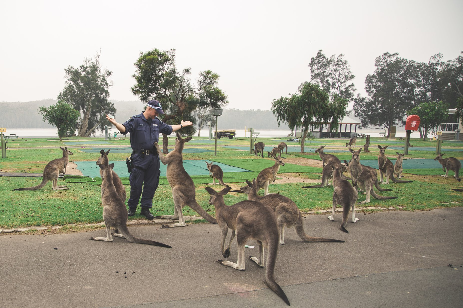 A NSW Police officer poses with a mob of grey kangaroos