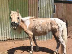 RSPCA removes miniature horses from property