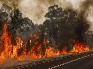 Rare 'dinosaur trees' survive national park fire