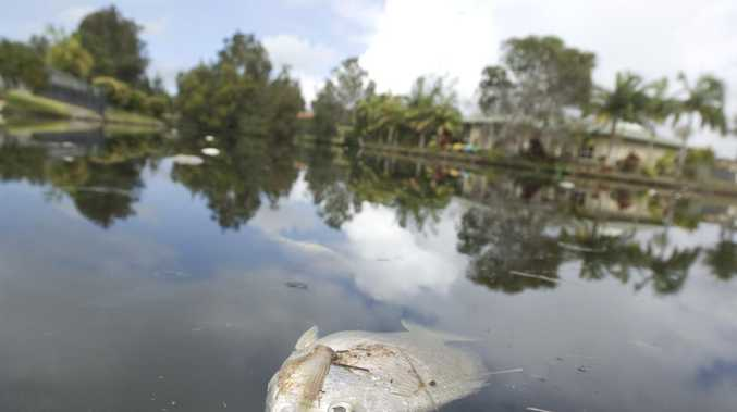 DIRE WARNING: Dry spell creates 'ticking time bomb' for fish kill