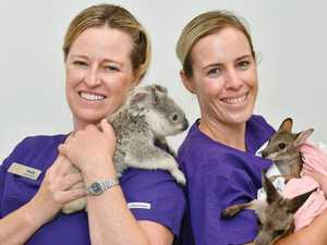 WATCH: Baby bush animals on hand for Andergrove fundraiser