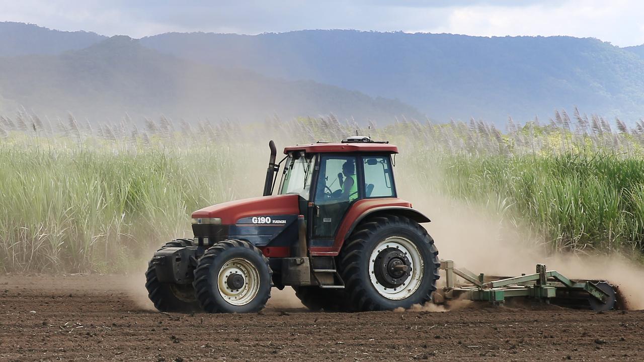 Cane Farming