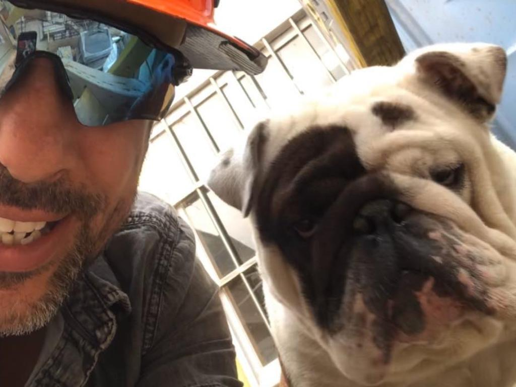Frank the bulldog, who died on a Qantas flight from Sydney to Melbourne, pictured with his owner Anthony Balletta. Source: Facebook – Anthony Balletta