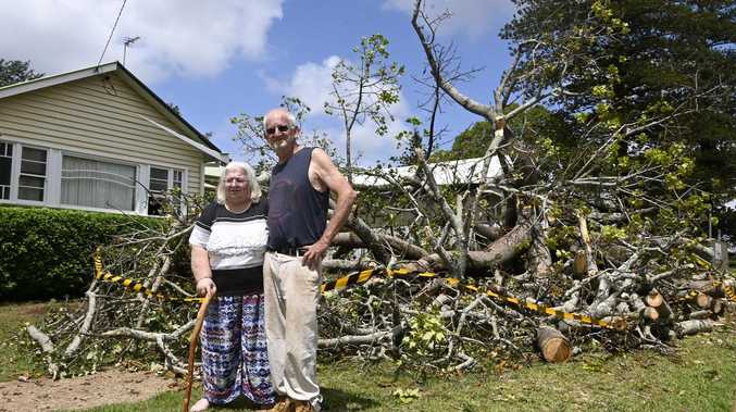 Toowoomba residents mourn loss of ancient bottle tree