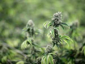 Mum fined $950 for marijuana plants