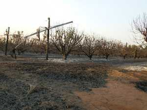 Bungundarra lychee growers