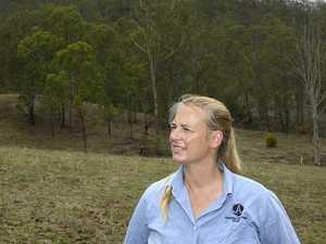 Plan for Koala santuary