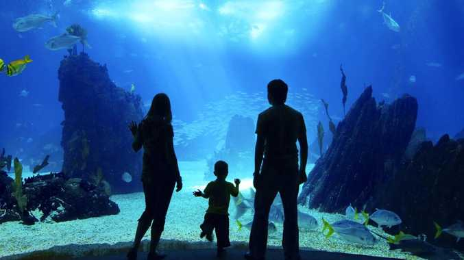 Man charged with kissing toddler at aquarium