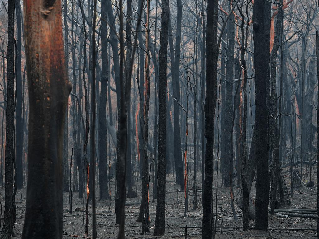 Bushland is burnt at Bilpin, in the Blue Mountains west of Sydney. (AAP Image/Dan Himbrechts)