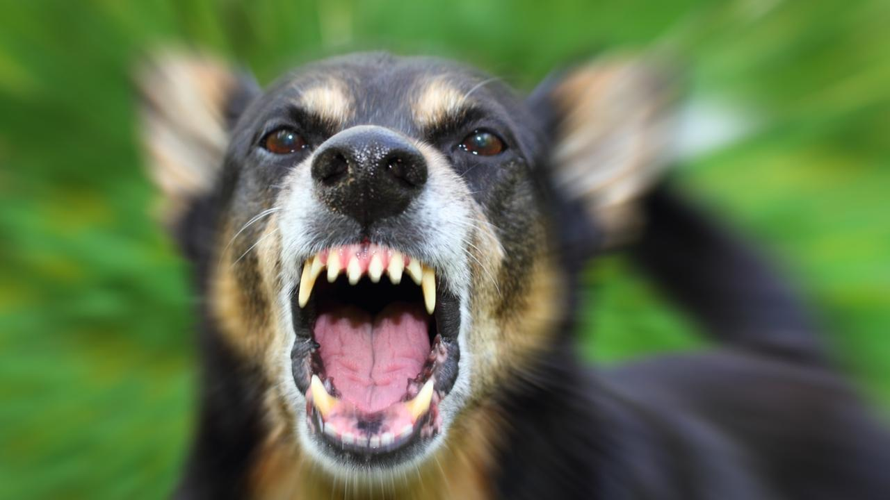 A Stanthorpe woman and her dogs were set upon in a vicious attack this morning.