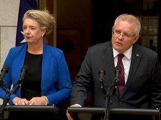 Former sports minister Bridget McKenzie and Prime Minister Scott Morrison are both feeling the heat over the sports grants scandal.