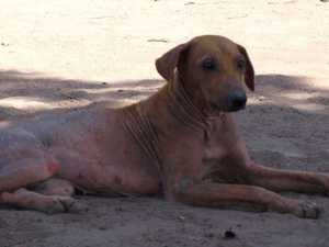 Aid on the way for starving Far North dogs
